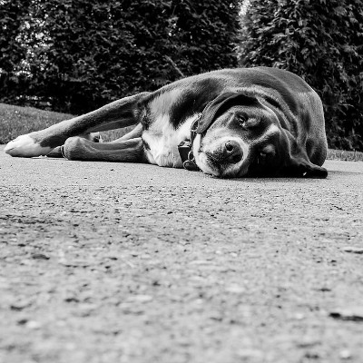 Image Result For Dog Training Business