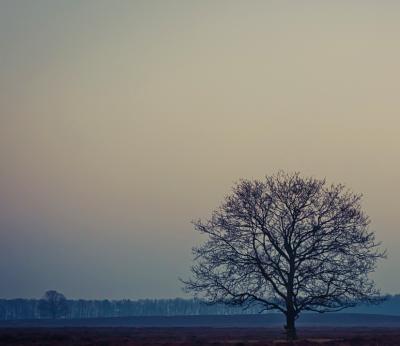 Logic Tree
